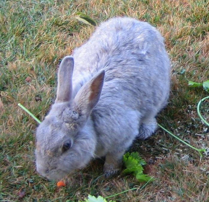 The Rabbit Rescuers