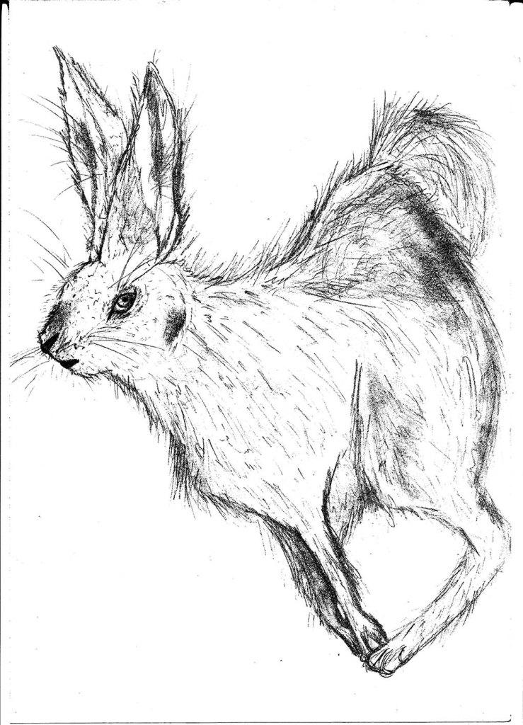 Paityn's Rabbit
